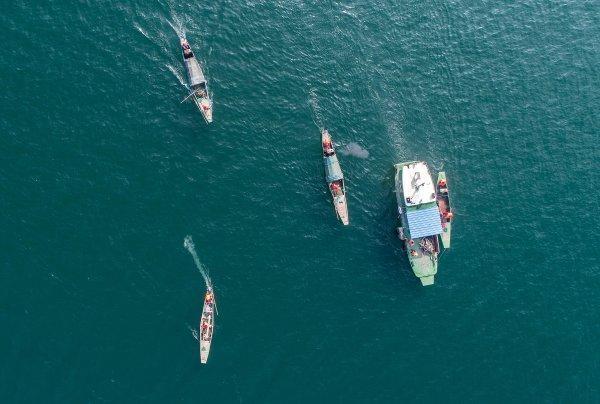 湖库地区如何保护生态 淳安经验成为全国典型