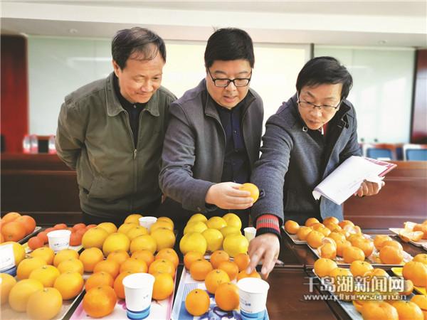 """宽皮橘类、杂柑类、柚类、橙类……我县优质柑橘接受专家""""检阅"""""""