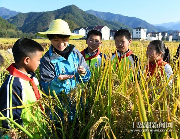 生态稻田喜获丰收