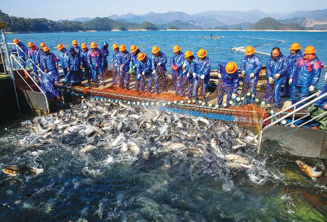 新年第一网有机鱼开捕