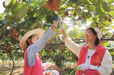 志愿服务进果园